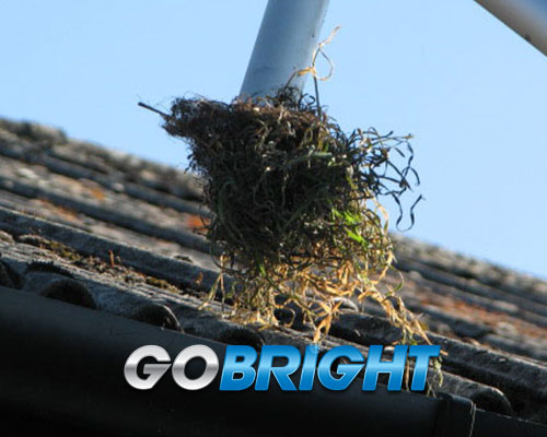 Gutter Clearing Images